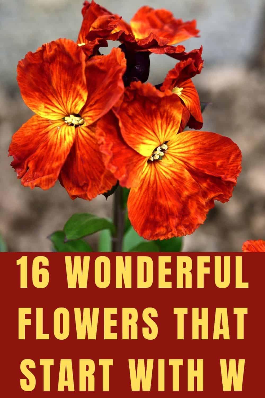 16 wonderful flowers that start with w