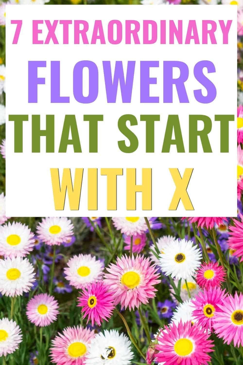 7 extraordinary flowers that start with x