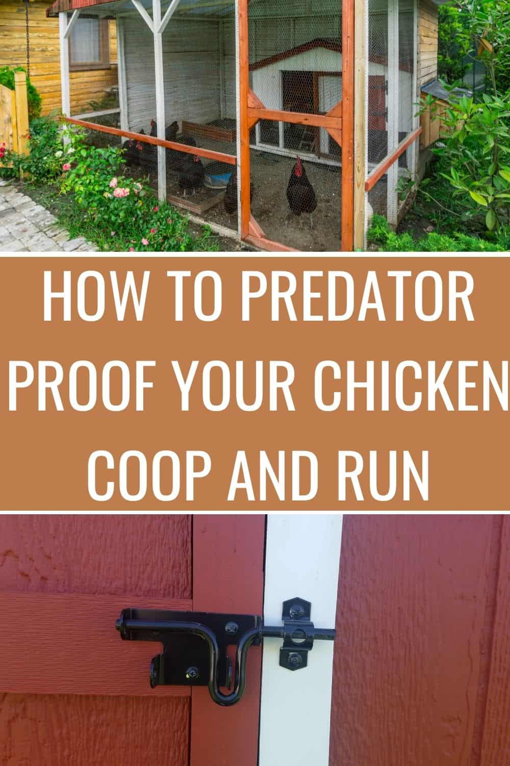 How to predator proof the chicken coop and run