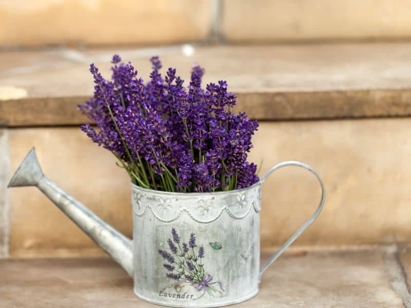 lavender in water canister