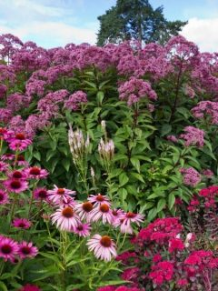 pretty pink perennial flowers in different shades