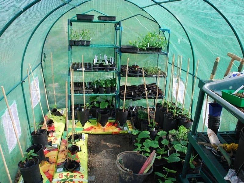 poly tunnel nursery