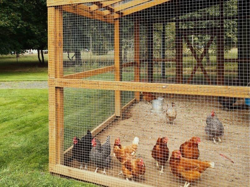 safe chicken run