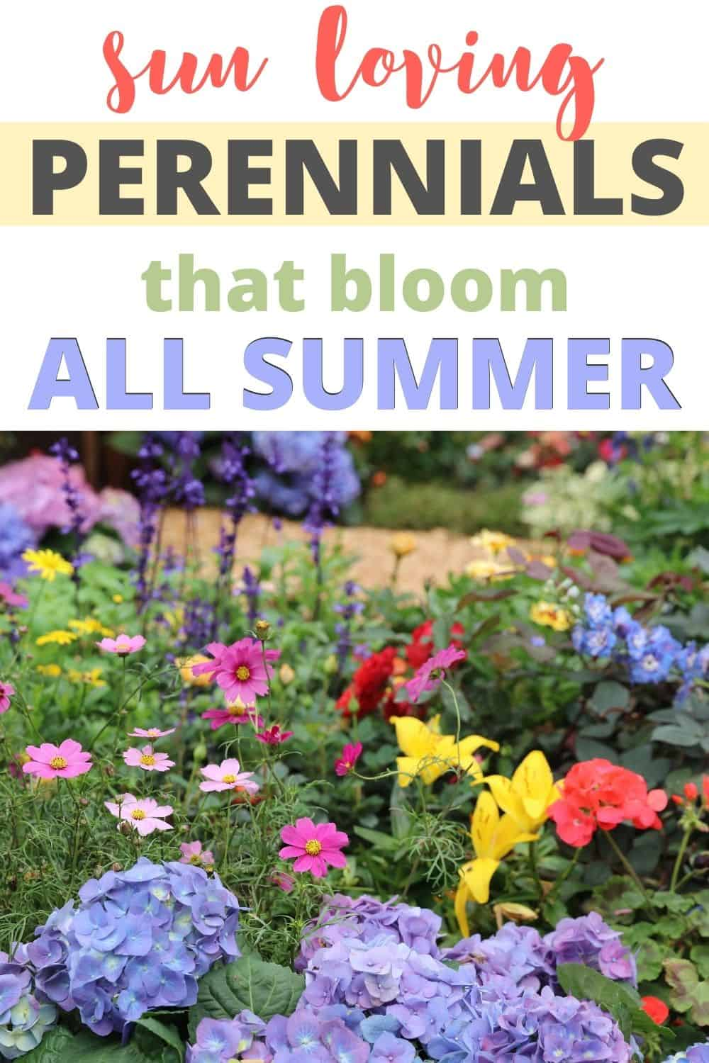 Sun loving perennials that bloom all summer