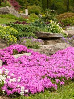terraced rock garden