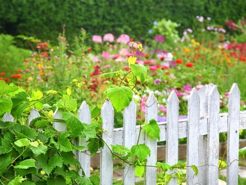 white washed wooden fence
