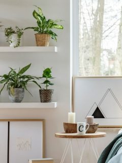 bedroom plants on a shelf