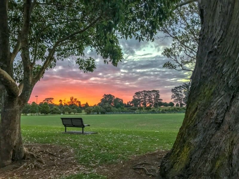 a bench between two trees, overlooking a stunning sunset