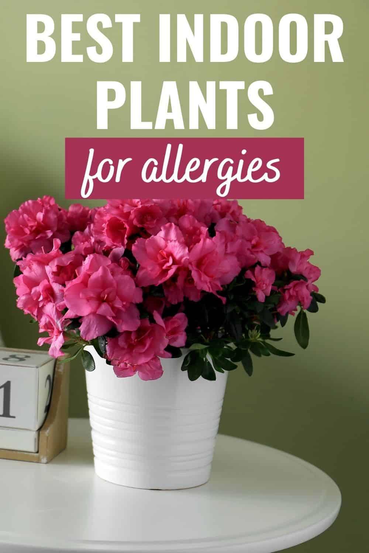 Best indoor plants for allergies