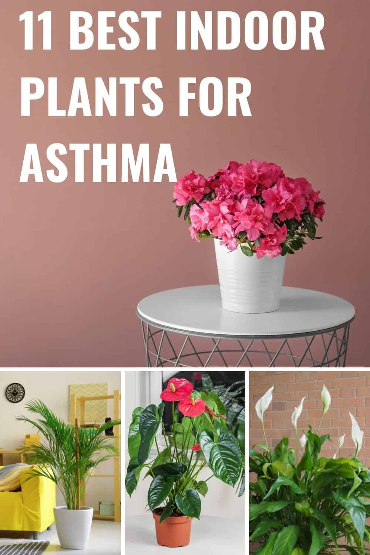 11 best indoor plants for asthma