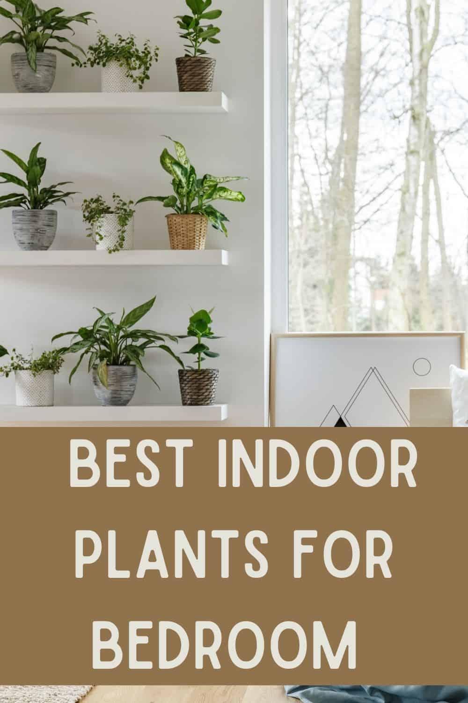 Best indoor plants for bedroom