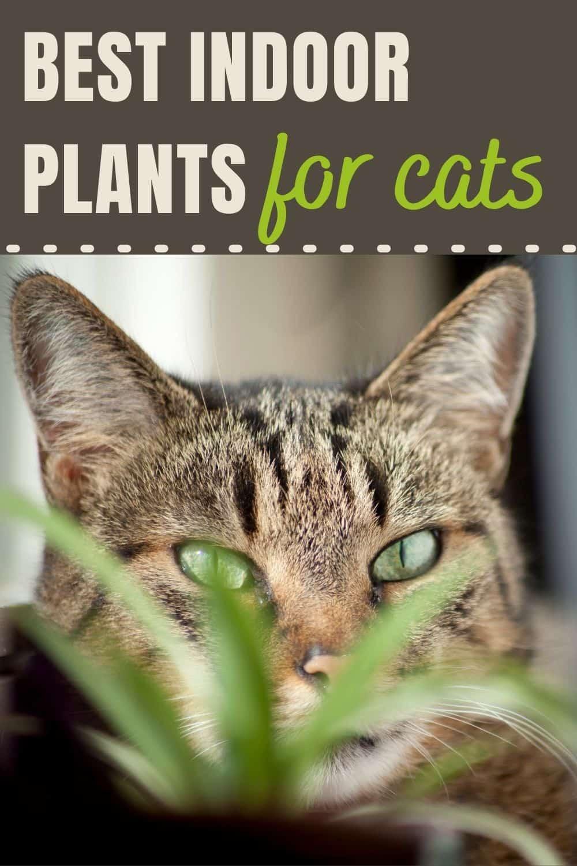 Best indoor plants for cats