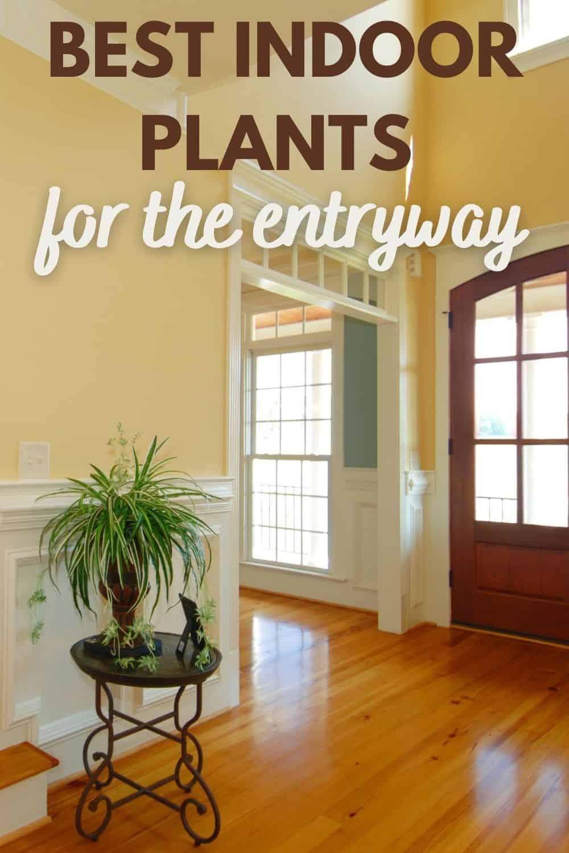 best indoor plants for entryway
