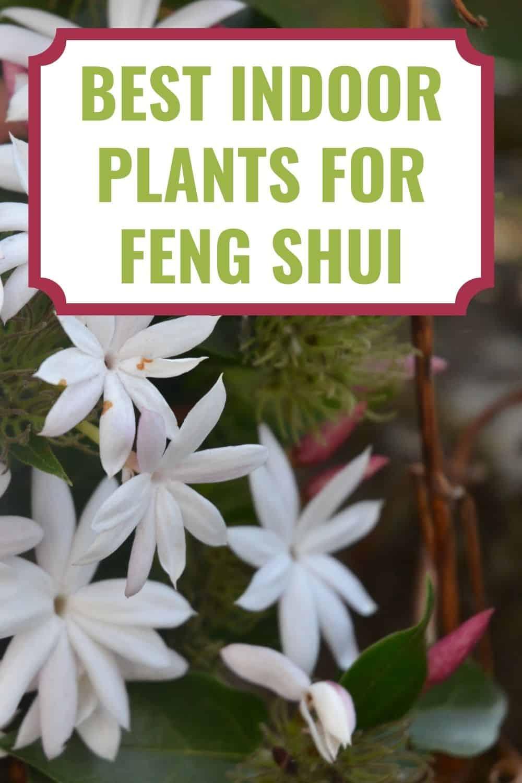 best indoor plants for feng shui