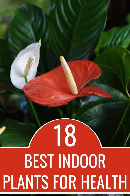 18 best indoor plants for health