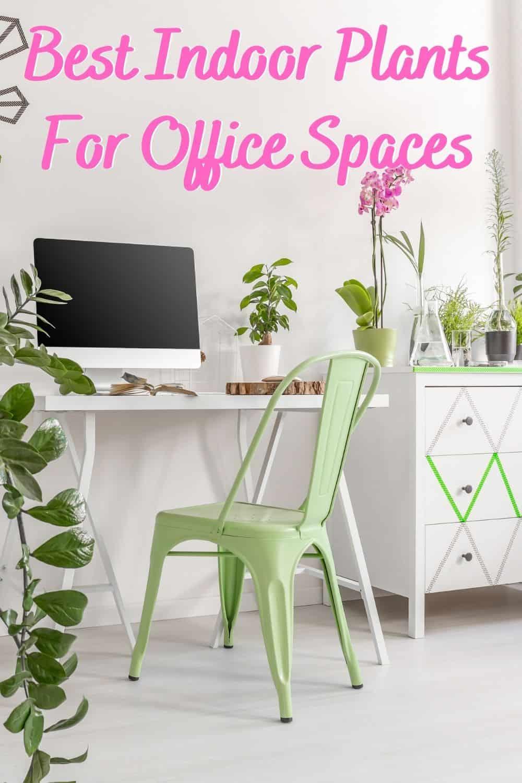 Best indoor plants for office spaces