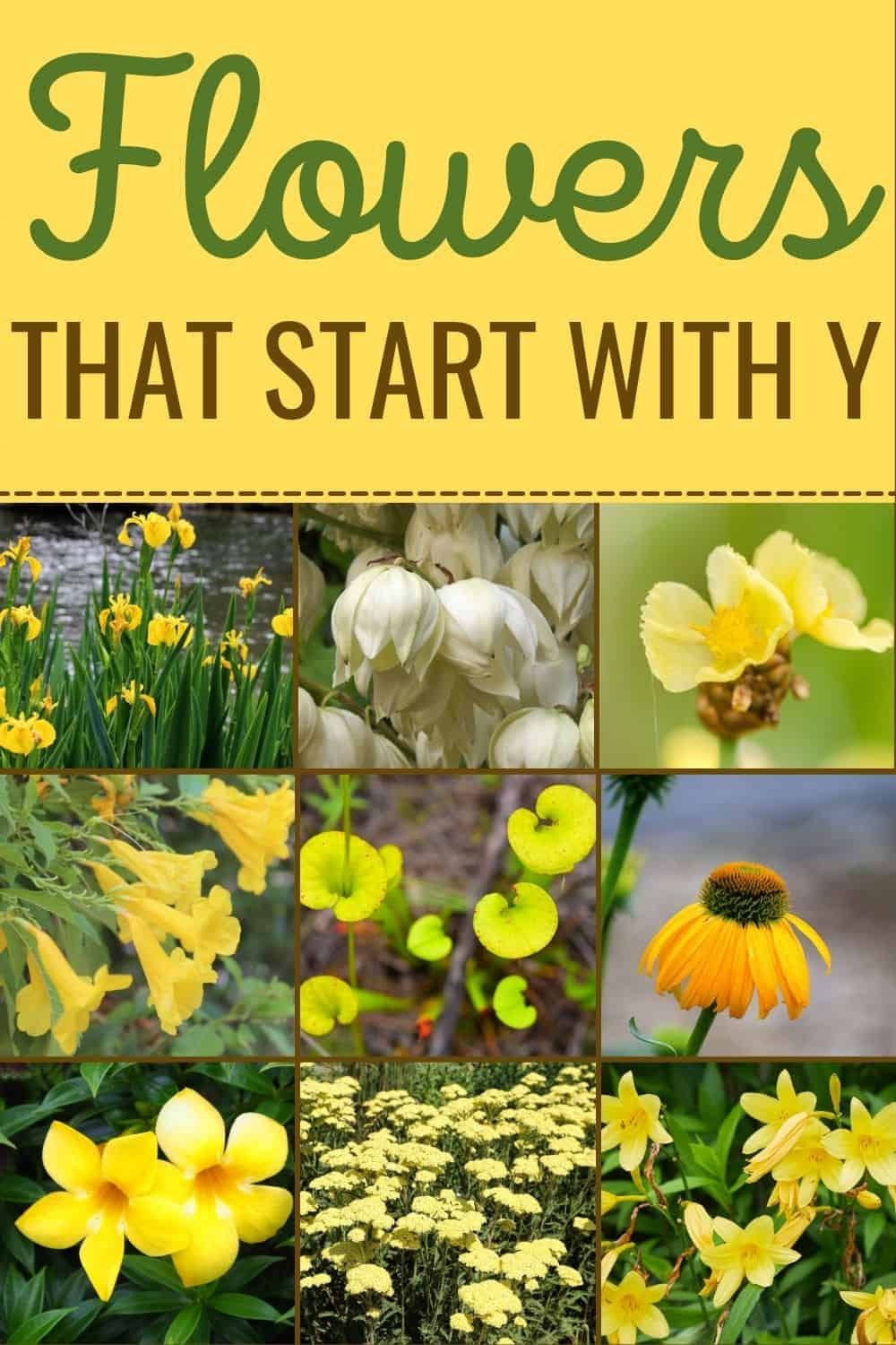 Flowers that start with Y
