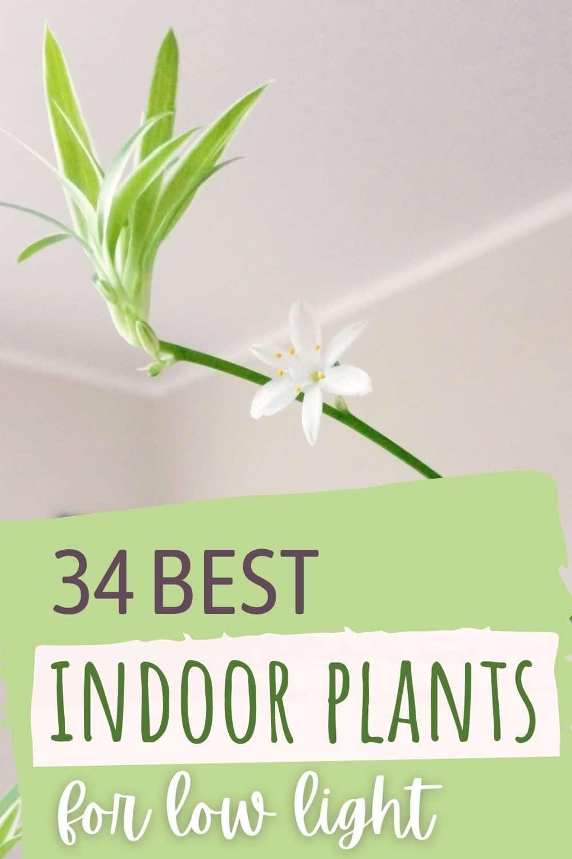 34 best indoor plants for low light