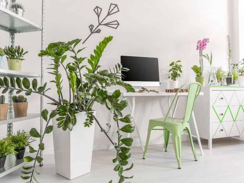 indoor plants for the office