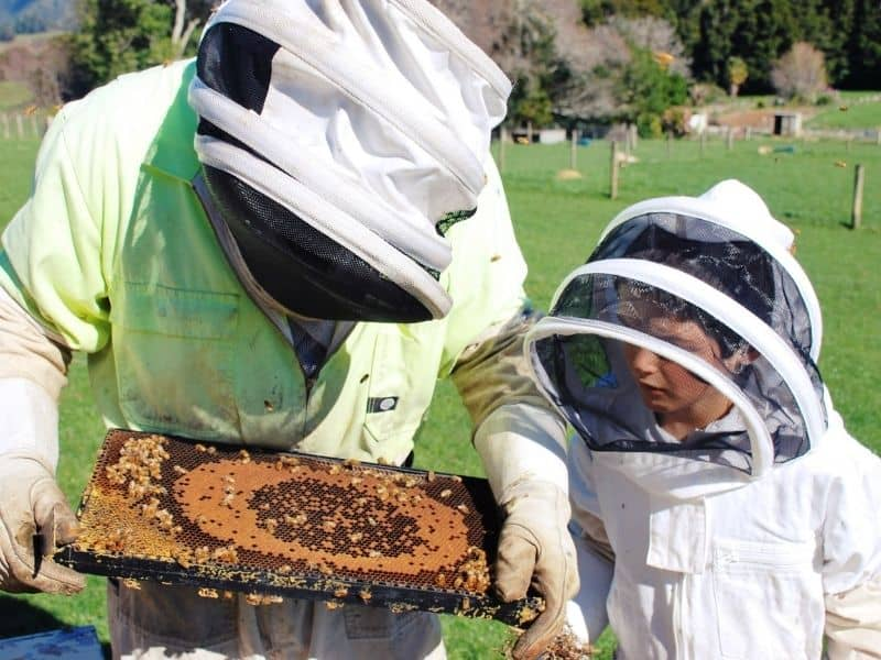 young child learning about bees from a beekeeper