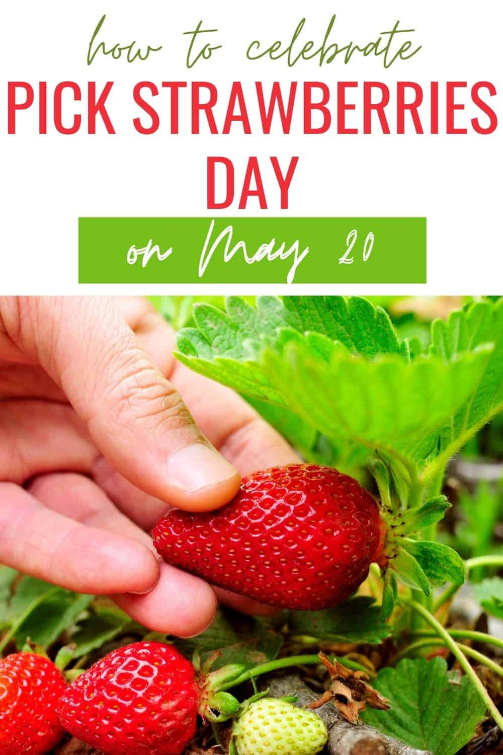 How to celebrate pick strawberries day on May 20