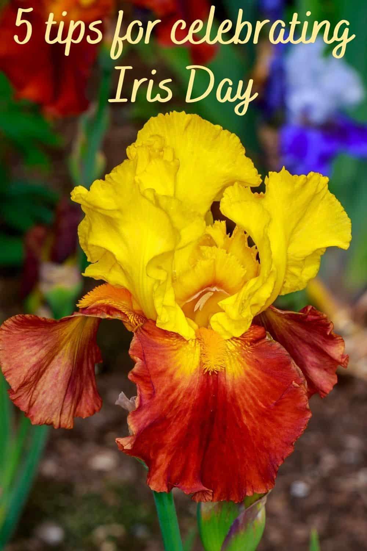 5 tips for celebrating Iris Day