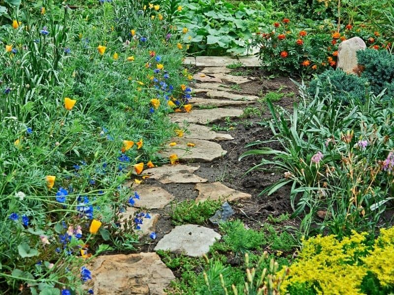 stone walkway flanked by colorful flowers