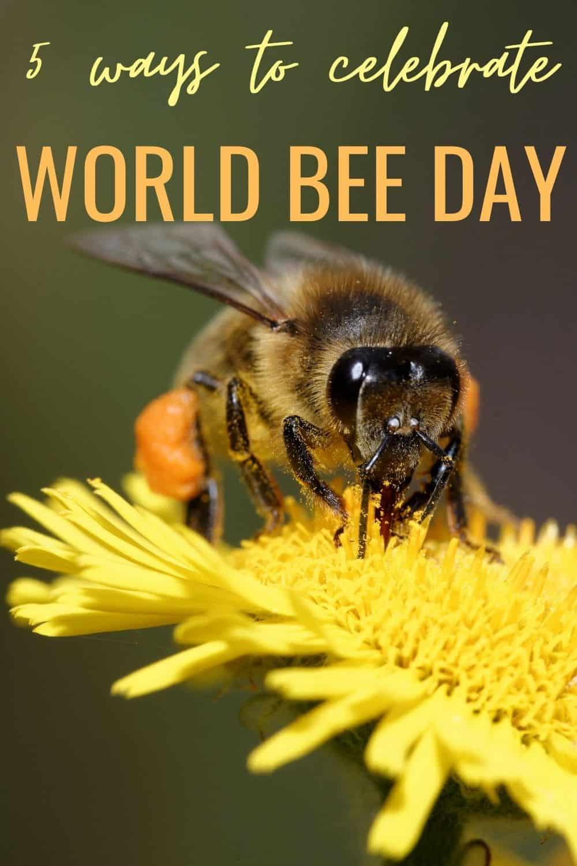 5 ways to celebrate World Bee Day