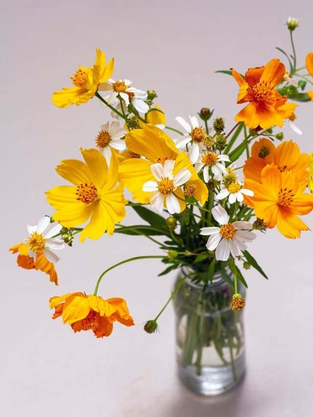 yellow and white flower bouquet in glass jar