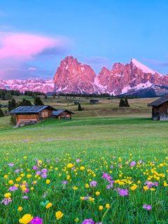 beautiful wildflower meadow