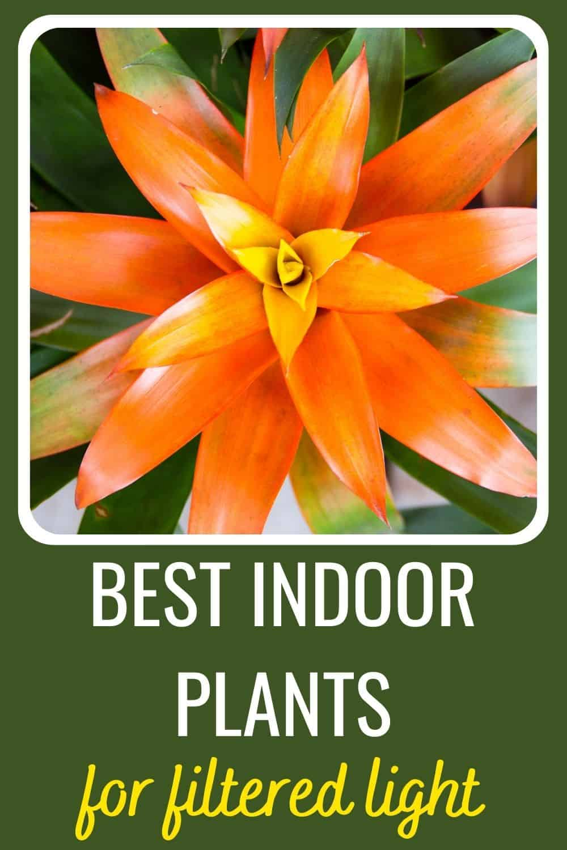 best indoor plants for filtered light