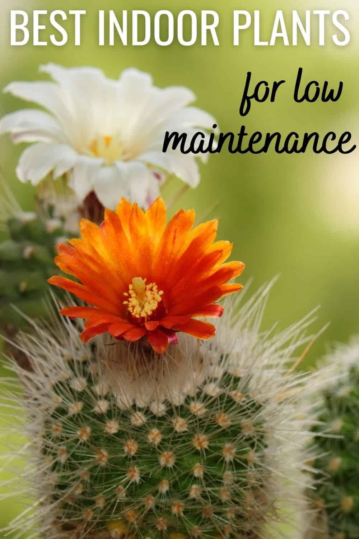 Best indoor plants for low maintenance