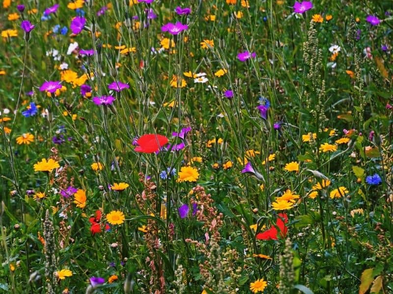 bright colored flower meadow