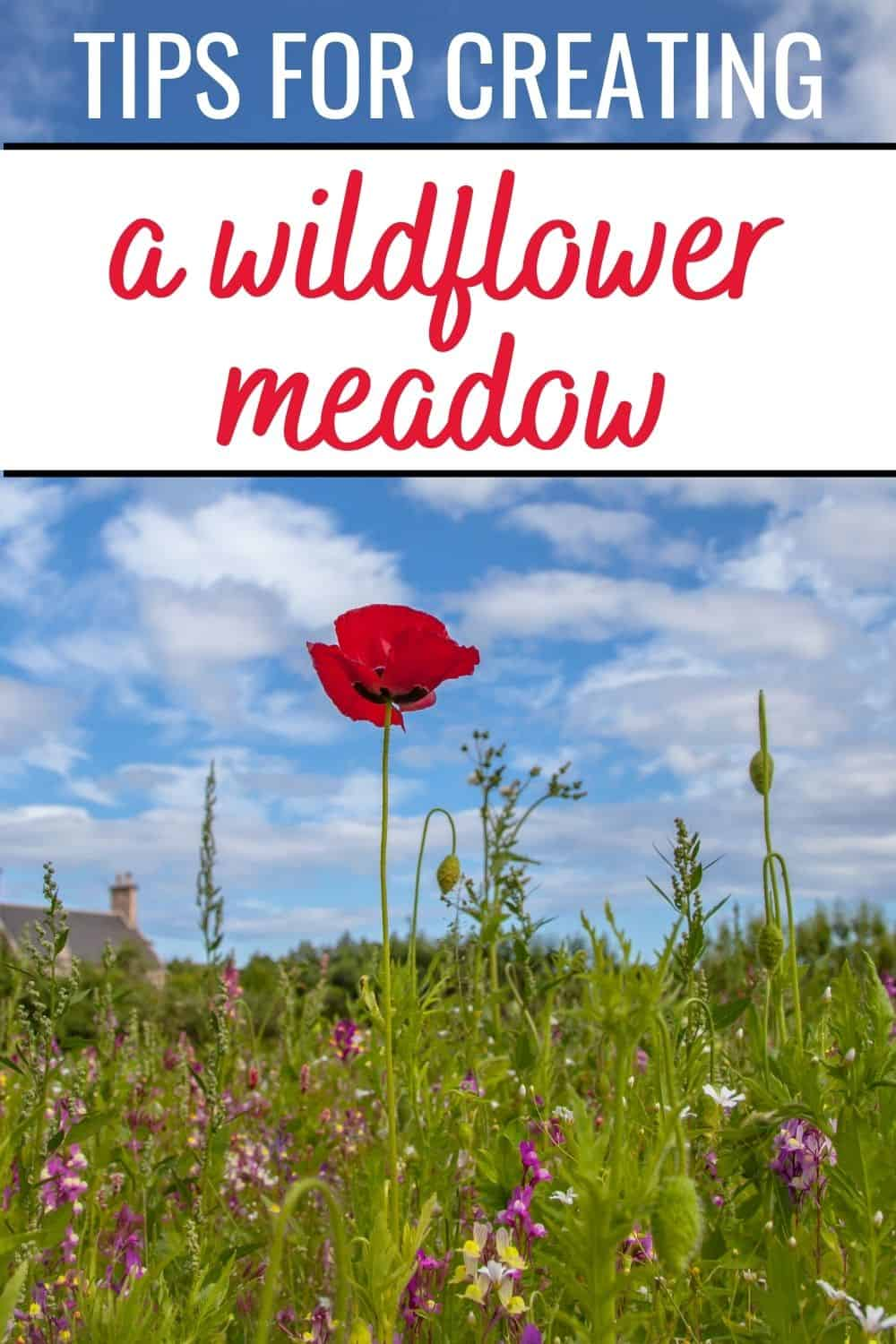 tips for creating a wildflower meadow