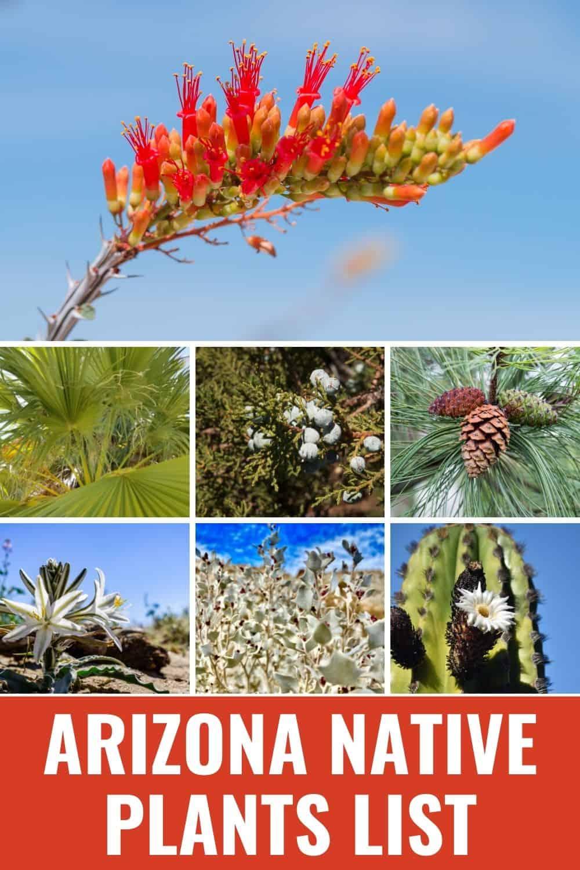 Arizona native plants list