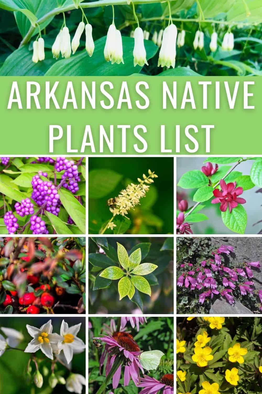 Arkansas native plants list