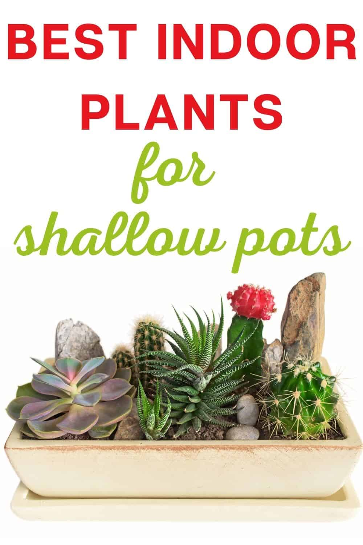 Best indoor plants for shallow pots
