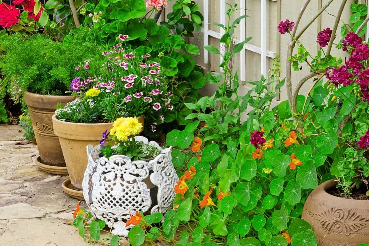 container garden on a rocky path