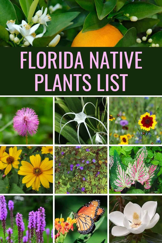Florida native plants list