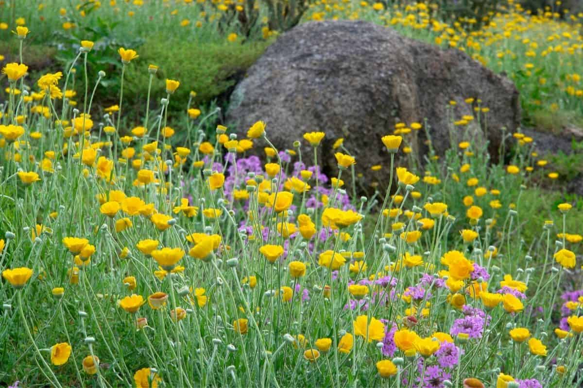 big boulder surrounded by flowers
