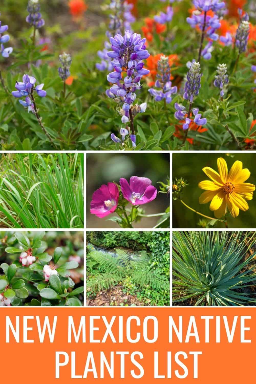 New Mexico native plants list