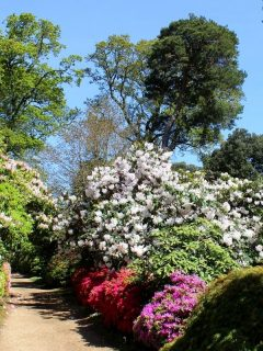pathway lined with bloming shrubs