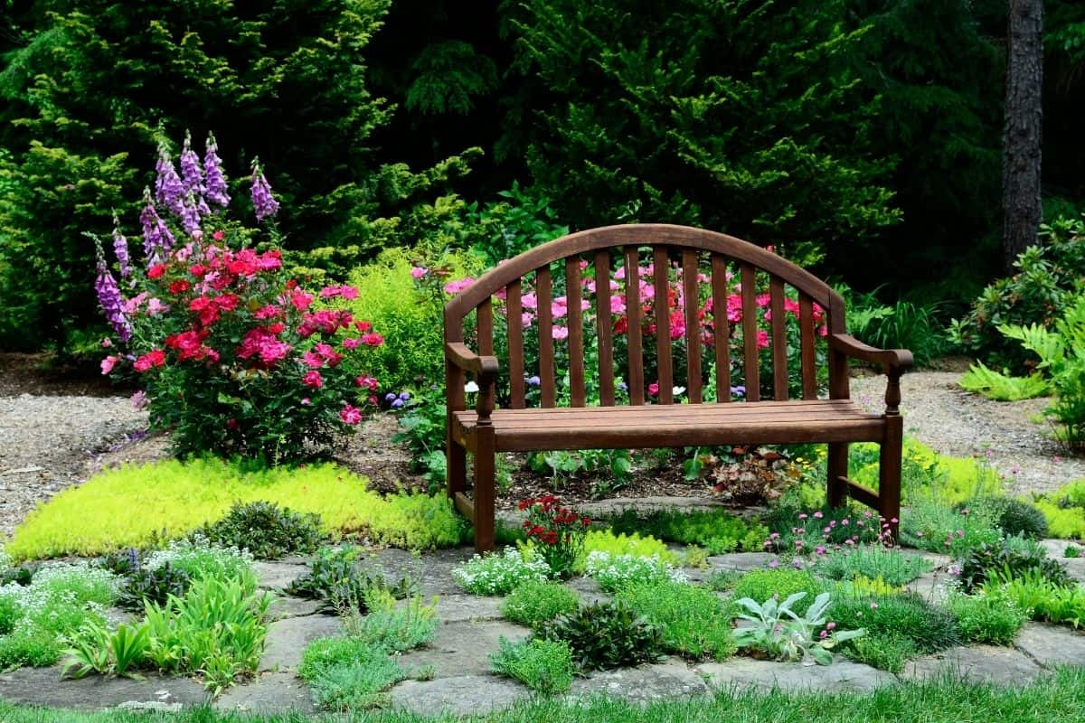 a bench sitting among roses and other plants