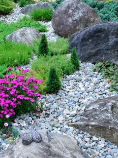 bright pink flowers amongst rocks and boulders