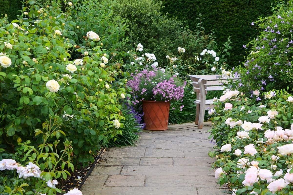 secret corner in a garden with white roses