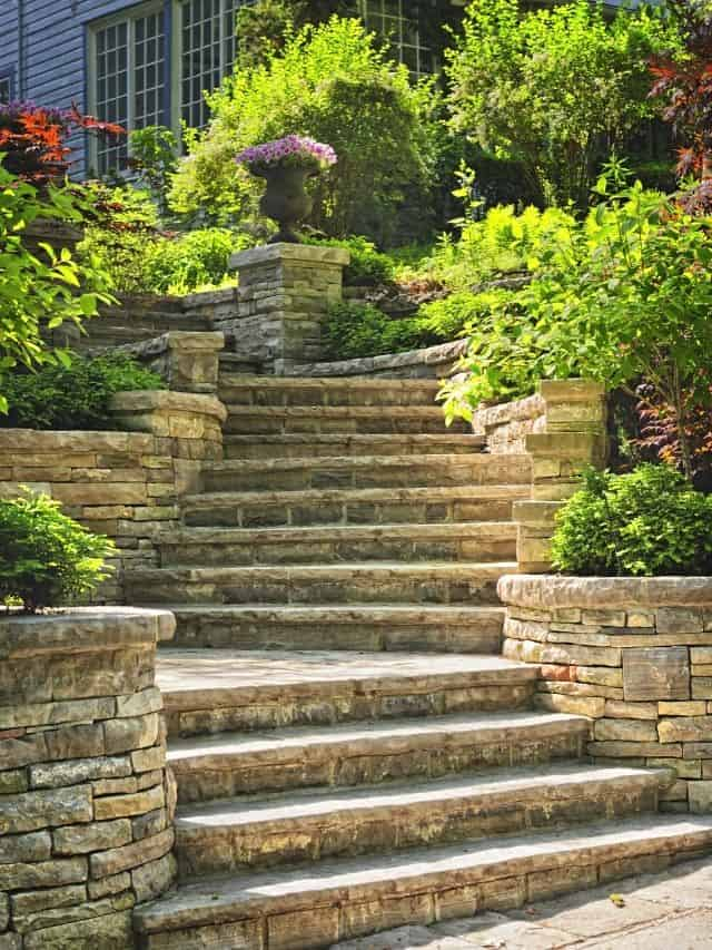 steps lined up with small shrubs