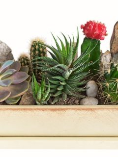 succulents and cacti in a shallow pot