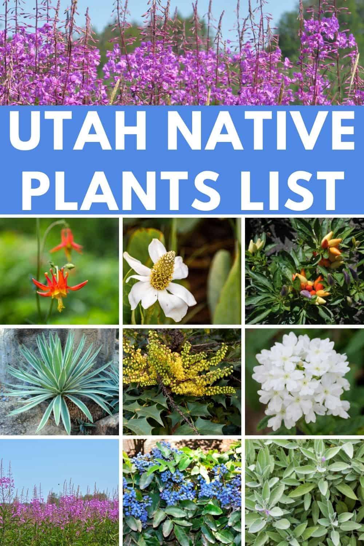 Utah native plants list