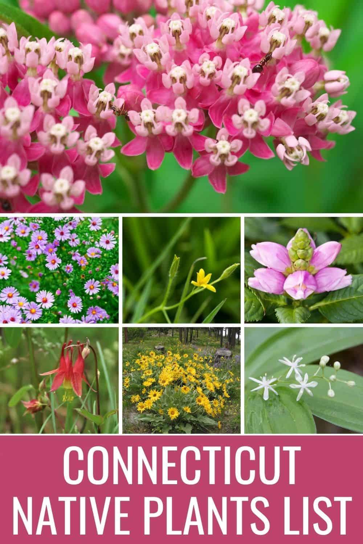 Connecticut native plants list