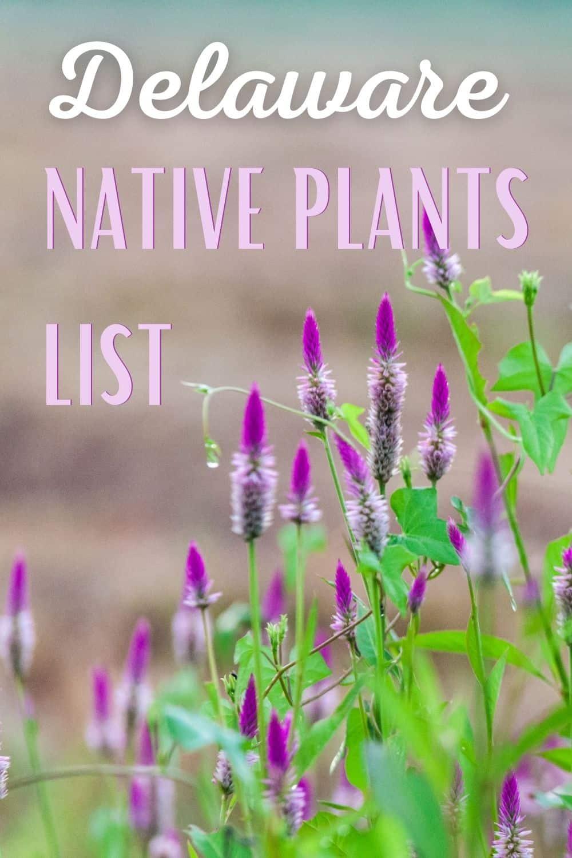 Delaware native plants list